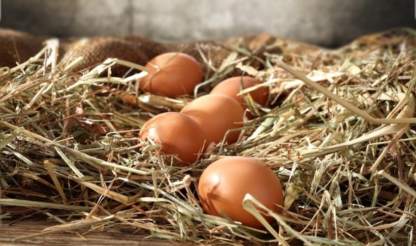 Uova dieta gruppo sanguigno
