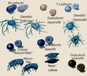 sistema_immunitario