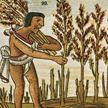 Amaranto immagine storica 2