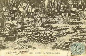 raccolta meloni a Cavaillon nel 1906