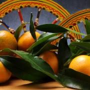 Citrus  clementina Clementin Clementine  Mandarinka Klementiini Clmentine klementina Klementin  Mandarini