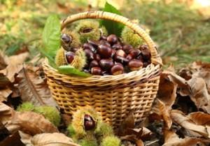 dieta del gruppo sanguigno b frutta secca