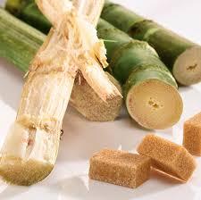 Lo zucchero di canna proviene dalle graminacee